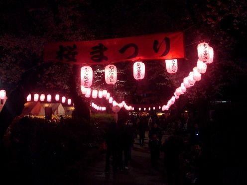 夜の新井薬師公園-第26回中野通り桜まつり