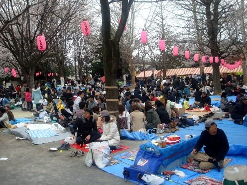 お花見-第26回中野通り桜まつり