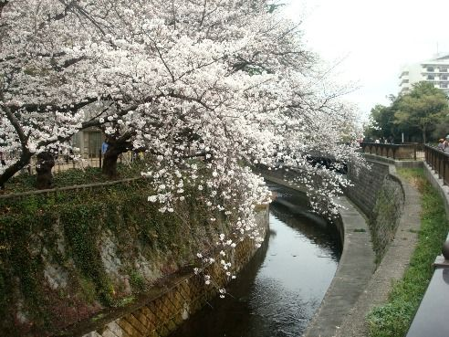 哲学堂公園-桜の名所