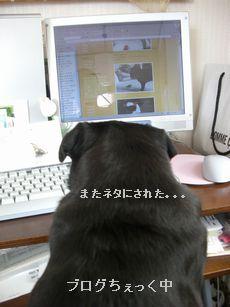 ブログちぇっく