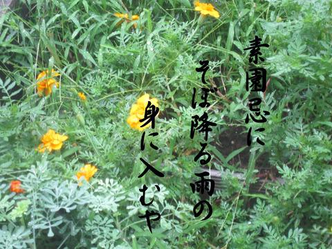 IMG_2666のコピー