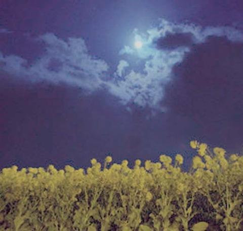 菜の花月夜