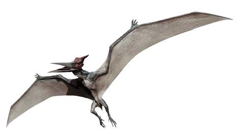 pteranodon-01