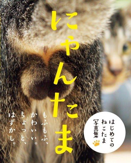 http://image.enuchi.jp/upload/201606/images/450.jpg