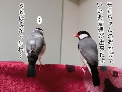 s-CIMG9463