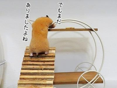 s-IMG_0684