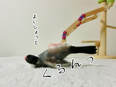 s-CIMG4012