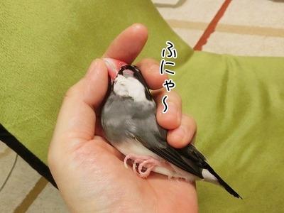 s-CIMG0821