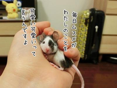 s-CIMG7469