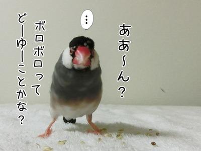 s-CIMG4636