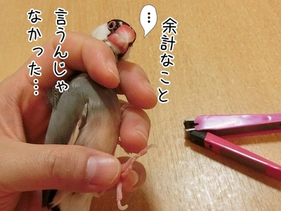 s-CIMG0021