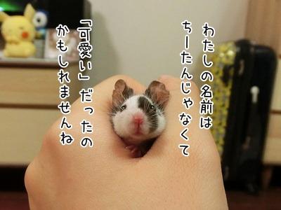 s-CIMG7462