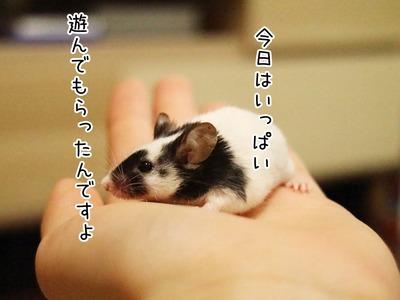s-IMG_5286