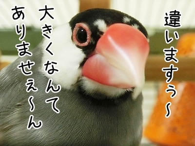 s-CIMG4648
