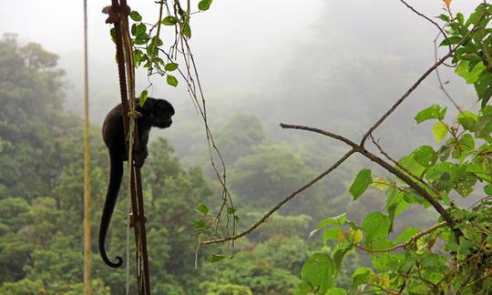 CRV_Main_Monteverde