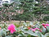 玉藻公園2