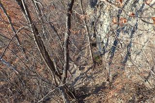 s-PB061429岩峰を巻く