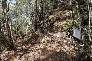 s-16山頂への登山道も左に進むP5231883