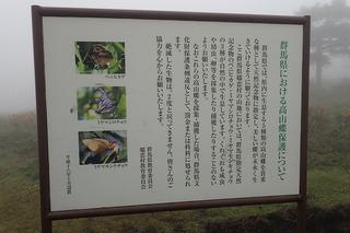 s-06高山蝶保護について