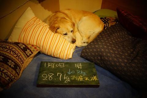 160110-201807くうのダイエット日記006_p
