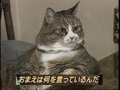 530px-お前は何を言ってるんだ(猫)