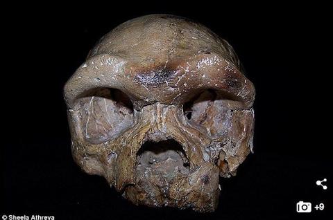 【ニュース】人類の起源は中国? 26万年前の頭蓋骨「ダーリー・スカル」がアフリカ誕生説を覆すか?