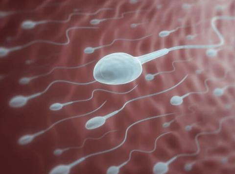 【ニュース】世界初・精液の成分を研究するプロジェクト始動