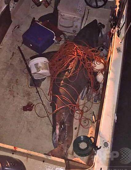 【痛いニュース】豪・ホホジロザメがボートに飛び乗る