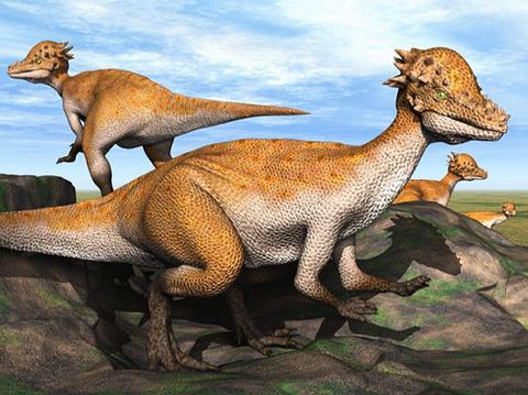 【2ch古代・生物】パキケファロサウルス・河童のような強固な頭を持つ恐竜