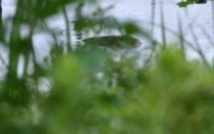 【UMA(未確認生物)】マツトドン・江戸川の怪生物