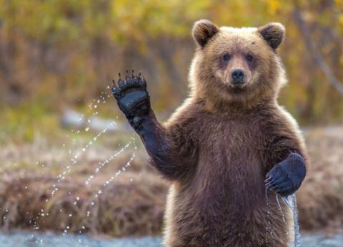 【痛いニュース】兵庫県・熊のような大型動物が目撃