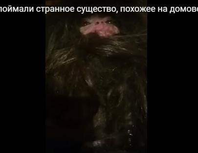 【面白ニュース】東欧でクリーチャーの動画公開イエティの子供?
