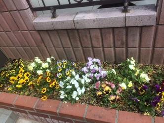 4月の庭4