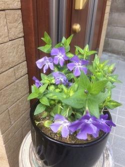 4月の庭5
