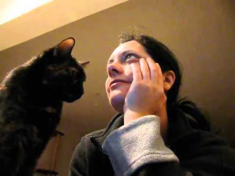 猫が飼い主に振り向いてもらいたいとき【動画】
