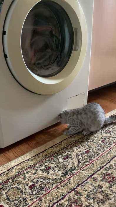 猫、洗濯機を観察する【動画】