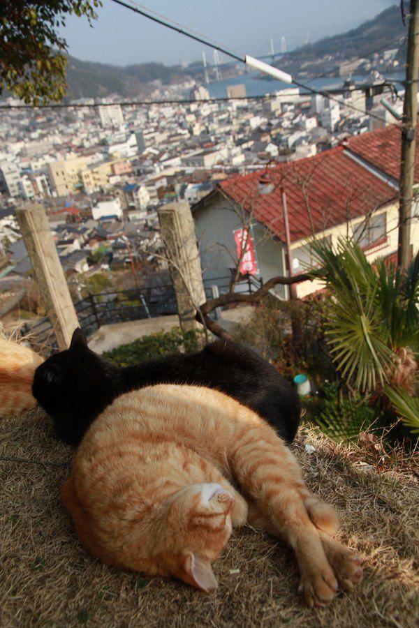 猫の細道の猫