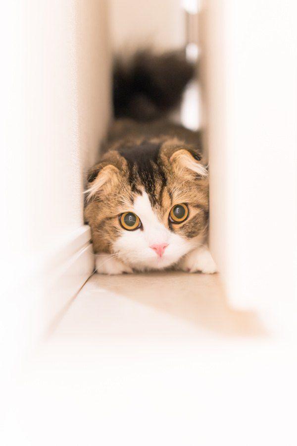 部屋の家具の間に入り込む猫