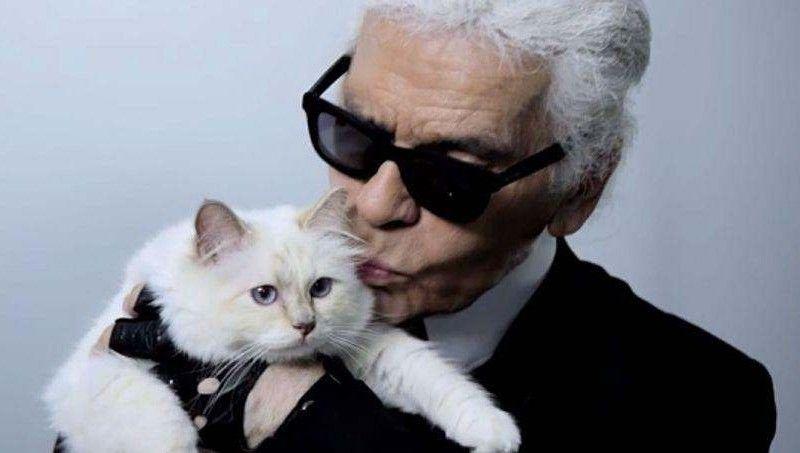 caf63387a4a6 故ラガーフェルド氏、愛猫に巨額の遺産? : 猫よっといで 動物みんなよっ ...