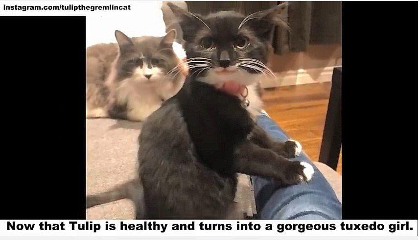 先住猫とチューリップ