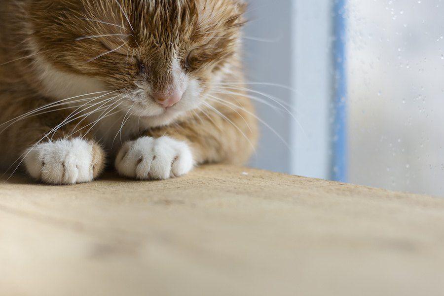 窓辺で目を閉じている猫