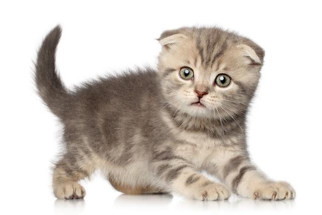 種類 ヒカキン 猫