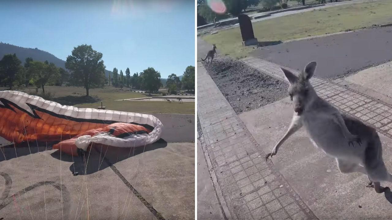 【動画】着陸するパラグライダーをめがけて走ってきたカンガルーに襲われた!!(オーストラリア)