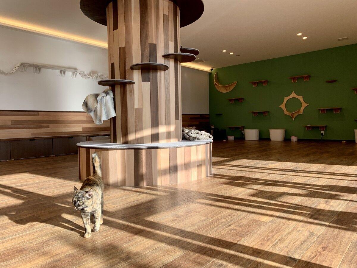 猫の日!新しいかたちの猫カフェOPEN!佐賀