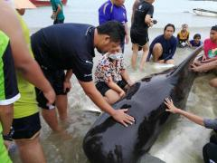 漂着したクジラの腹からビニール袋80枚8kg分が見つかる タイ