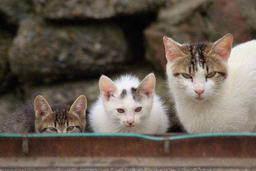 警戒してこちらを見る猫の親子