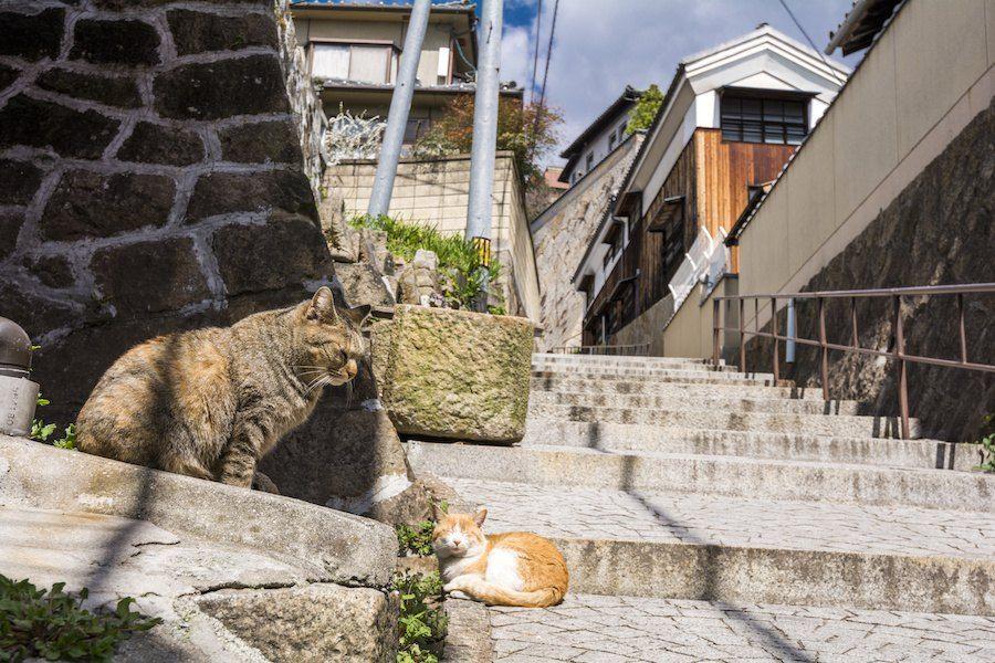 尾道の街並みとくつろぐ猫