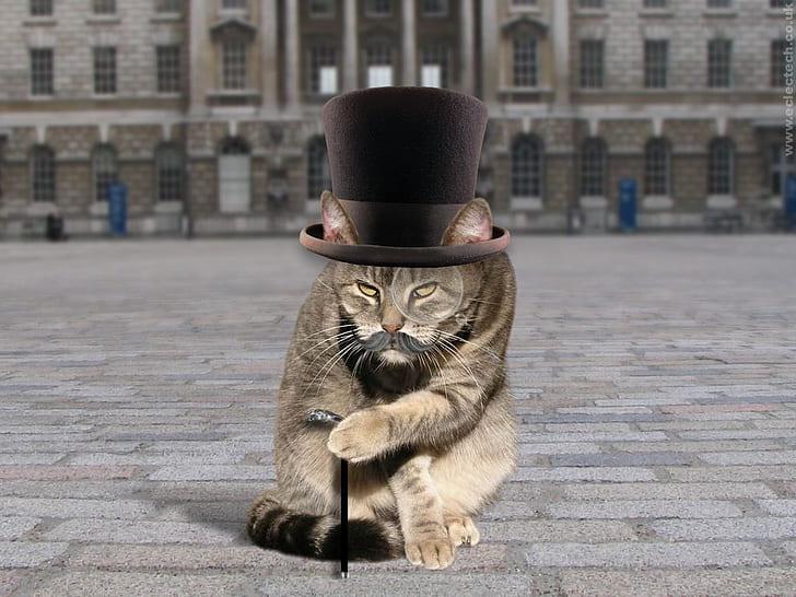 猫トラブル イギリスの場合