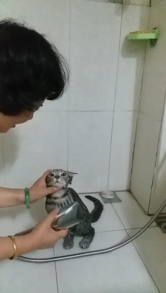 子猫のシャワー【動画】南京