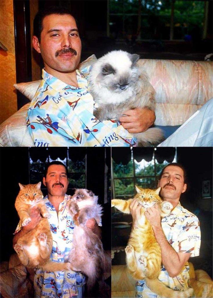『ボヘミアンラプソディー』Twitterで「猫の日」にちなんだ特別映像を公開